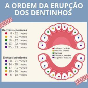A ordem de erupção dos dentinhos